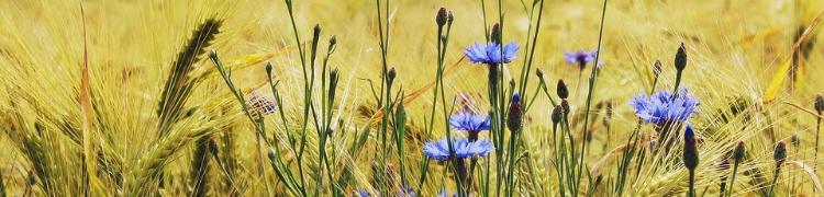 Sinonīmu vārdnīca ziedi